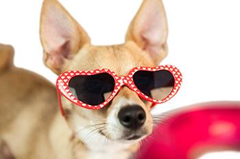A Cool Dog at NJ Dog Daycare